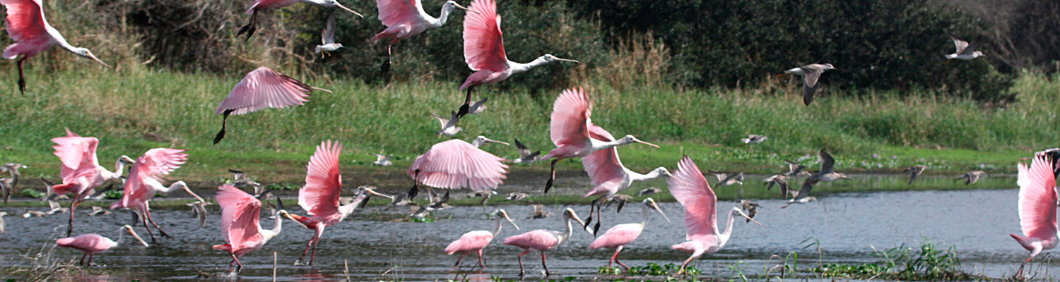 Soil & Water Conservation - flock of pink flamingos in water